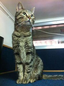 finn kitty cat looking proud