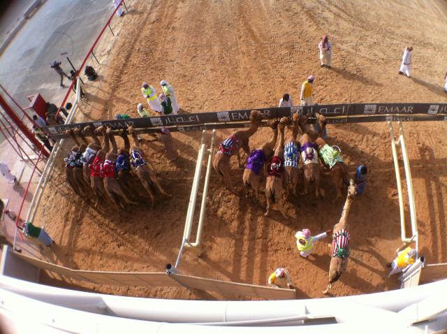camel races_start line