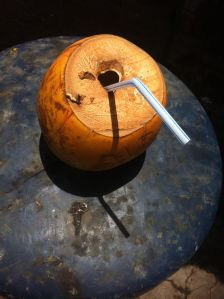 coconut with straw at masafi friday market in fujayrah, UAE