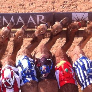 whats in a name camels at the start line